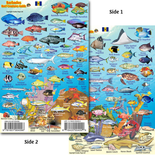 Barbados Mini Fish Id Card