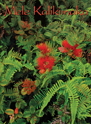 Christmas Cards - Coral Cards Floral - 1033 / Ohia Lehua / 10 cards per box