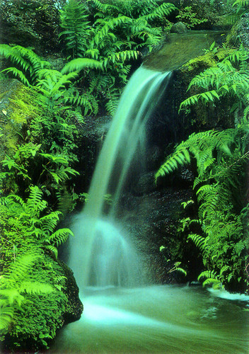 P275 - Waterfall Postcard 50 Pack