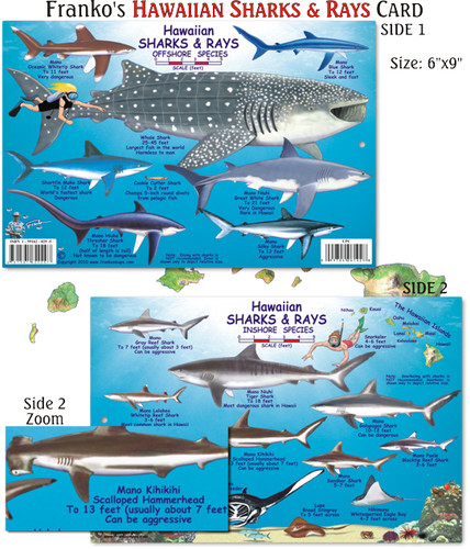 Hawaiian Sharks & Rays Creatures Guide