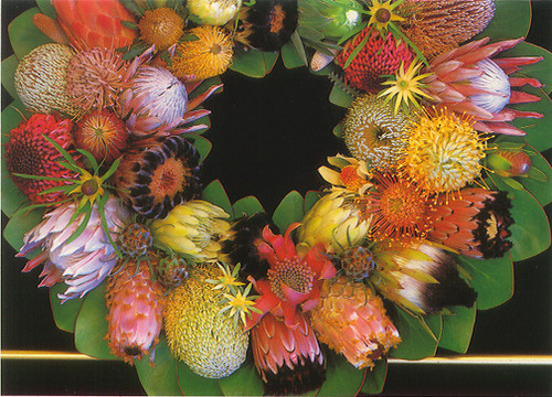 Protea Wreath - Notecard 6 Pack
