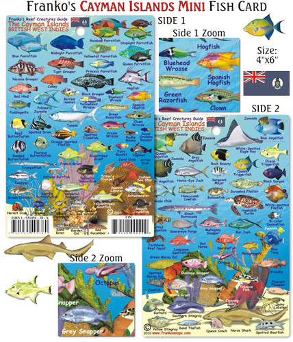 Cayman Islands Mini Fish Card