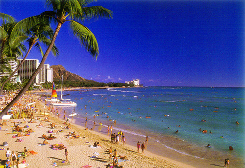 P294 - Fun Waikiki Beach Postcard 50 Pack