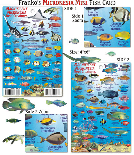 Micronesia Mini Reef Creatures Identification Guide (Fish Card)