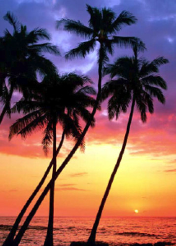 Sunset Palms 5x7 Postcard 25 Pack