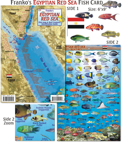 Egyptian Red Sea Fish Card