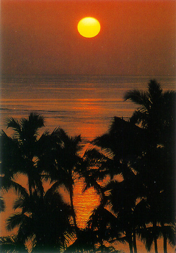 P029 - Sunset & Palm Postcard 50 Pack