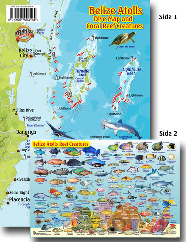 Belize Reef Creatures Identification Guide (Fish Card)
