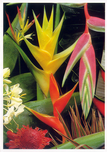 Tropical Arrangement I - Notecard 6 Pack