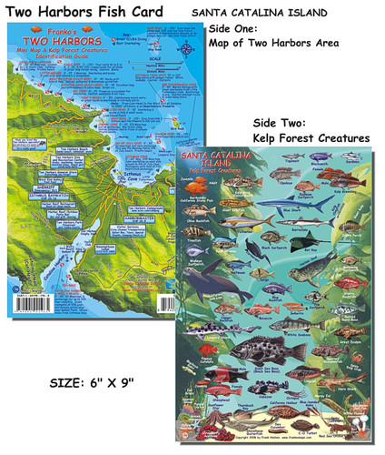 Two Harbors Catalina Reef Creatures Guide (fish card)