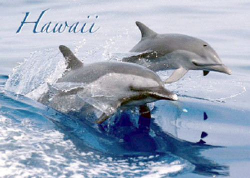 Dolphins Hawaii 5x7 Postcard 25 Pack