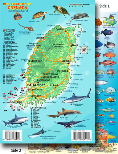 Grenada Dive and Reef Creatures Card