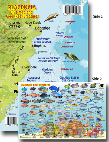Placencia Dive and Reef Creatures Card