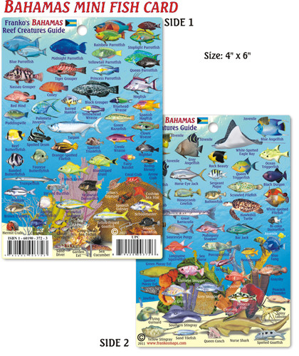 Mini Bahamas Fish Card