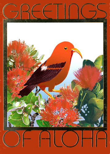 Christmas Cards - Great Creations - XF1138 / Iiwi in Lehua / 10 cards per box