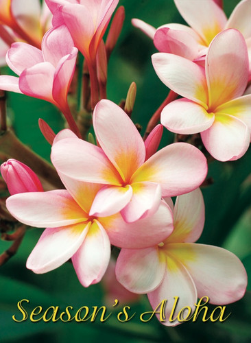 Christmas Cards - Coral Cards - 1041 - Christmas/pink plumeria / 10 cards per box