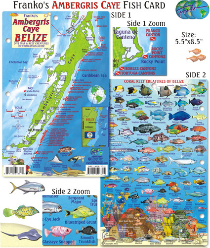 Ambergris Caye Belize Fish Card