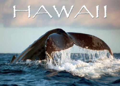 Whale Tail Hawaii 5x7 Postcard 25 Pack