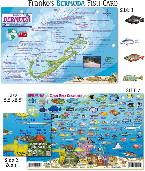 Bermuda fish card mail order hawaii for Mail order fish