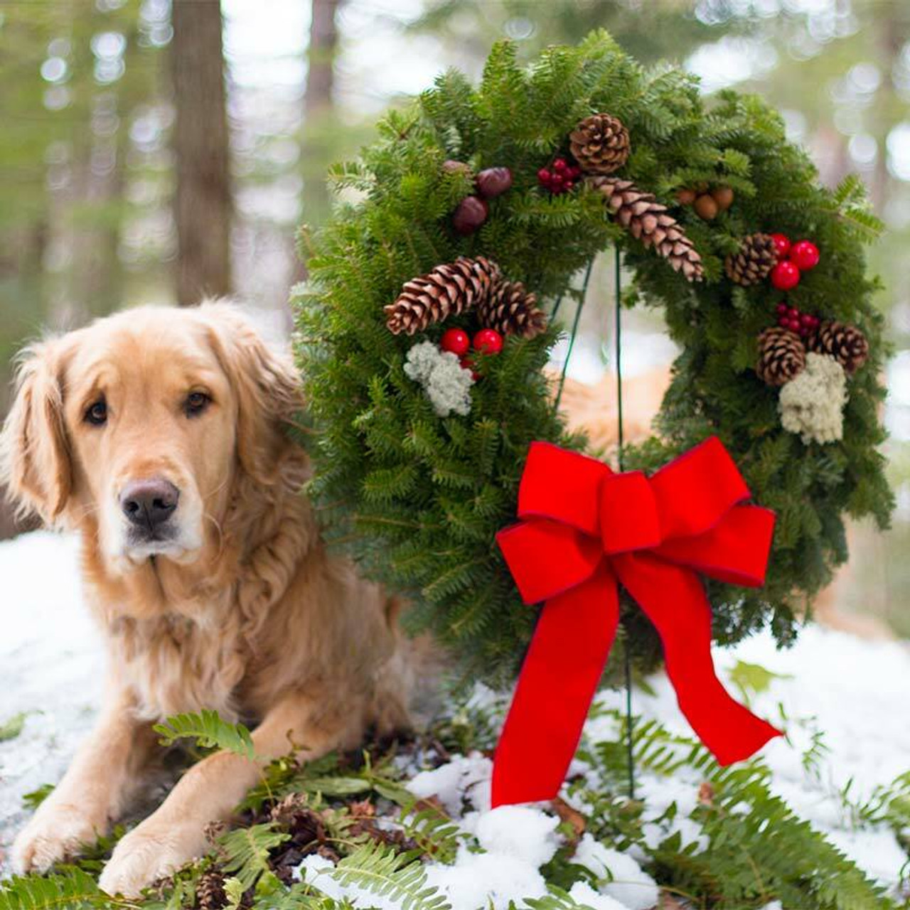 Original Fresh Christmas Wreaths For Sale Made In Maine. Red Bow, Acorns  Pine Cones