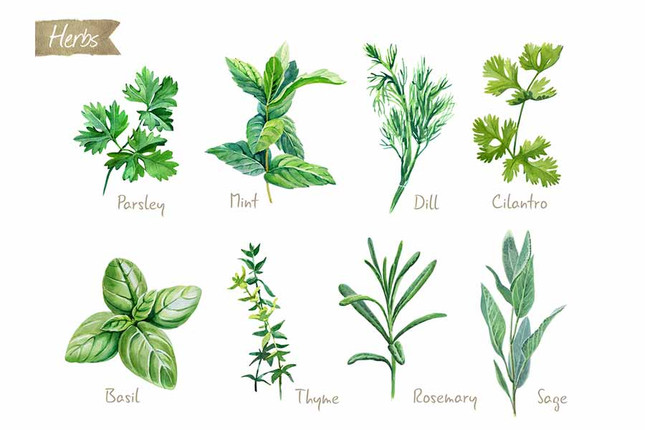 Common  Spices  You'll  Want  to  Grow  Yourself