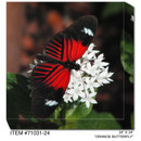 Orange Butterfly Canvas Wall Art