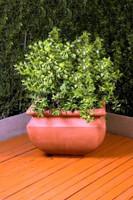 Mungo Planter