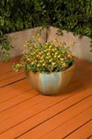 Teacup Planter