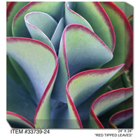 Red Tipped Leaves Canvas Wall Art