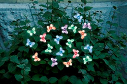 Butterfly Solar String Lights- 20 LED Light String