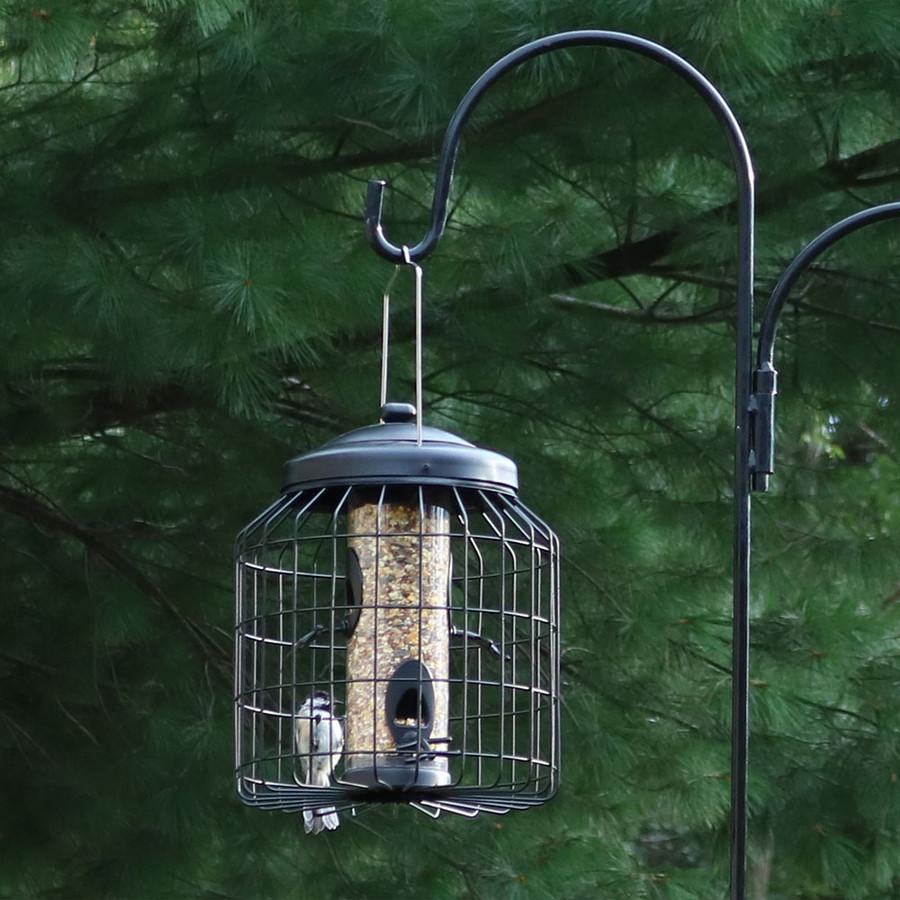 Outdoor w/Bird