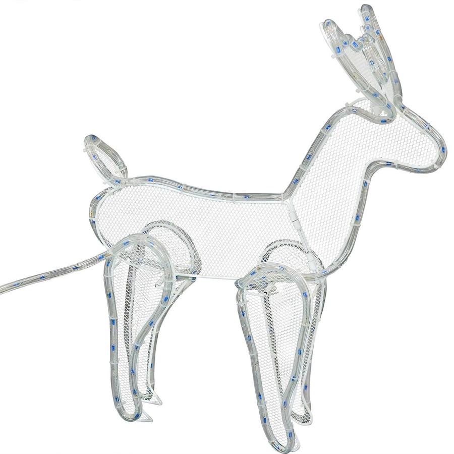Closeup of Reindeer