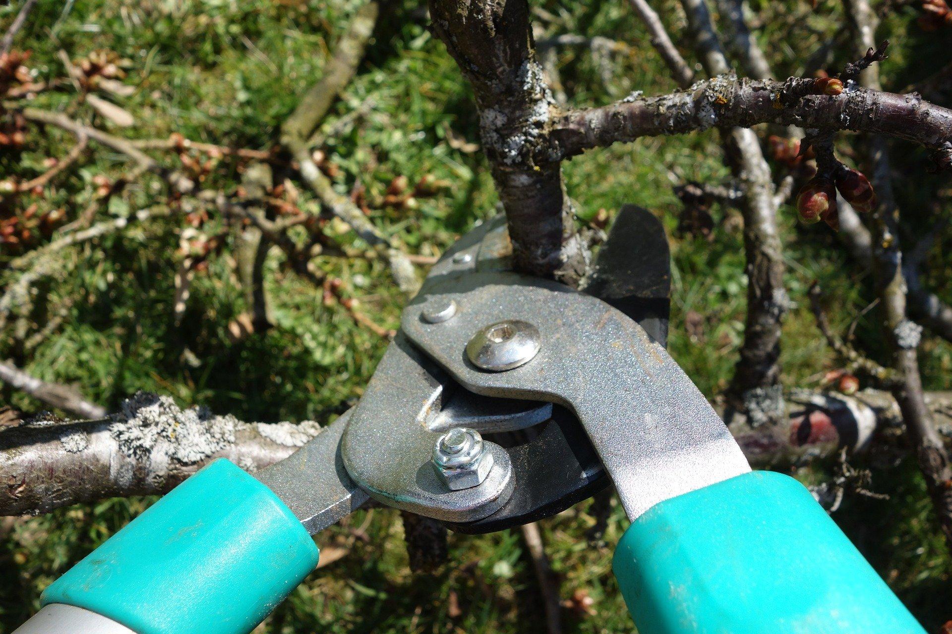 pruning-shears-535350-1920.jpg