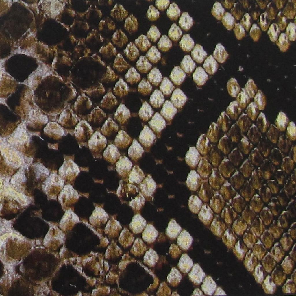 Snake Skin Print Waistband Swatch