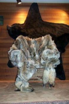 Coyote Blanket