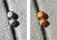 Letter Photography - Letter B - Fruit Wall Art and Wall Decal Prints