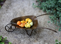 Miniature Gourds
