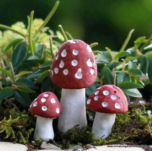 Red Dotted 'Shrooms
