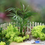 Parlor Palm / Neanthe bella
