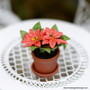 Potted Poinsettia