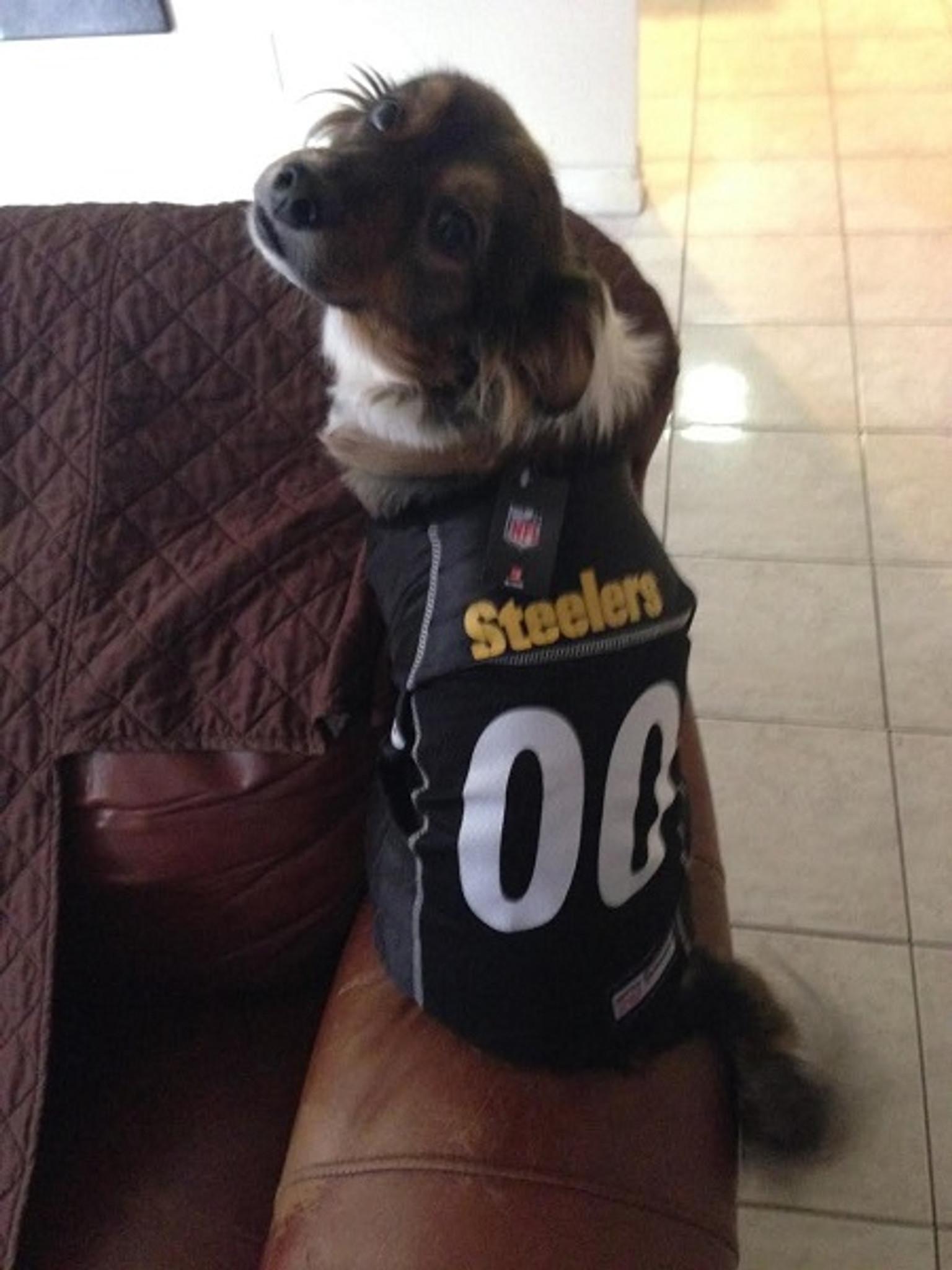 Carolina Panthers Pink Pet Dog Too Cute Squad Dress SMALL NFL faaa8eea1