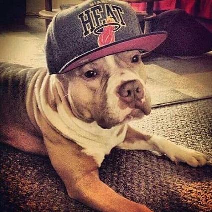 heatdog.jpg
