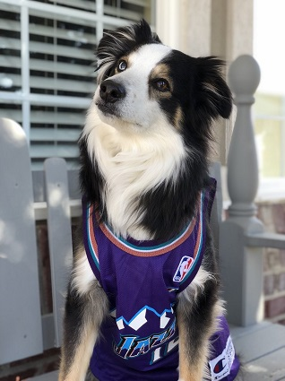 Utah Jazz Dog Pet   Humans Gear 3e11d4d65