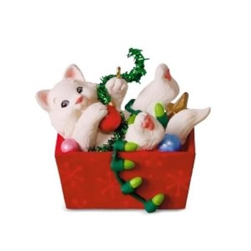 himalayan siamese mix cat