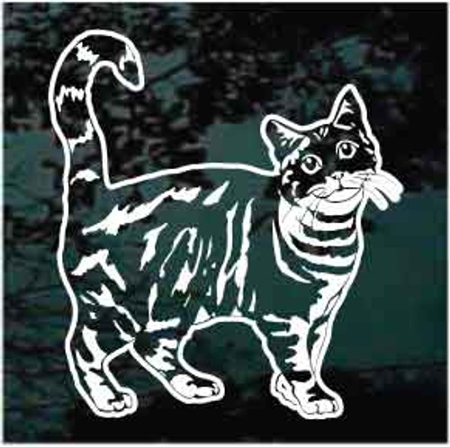American Tabby Cat Decals