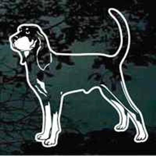 Coonhound Standing