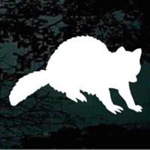 Raccoon 02