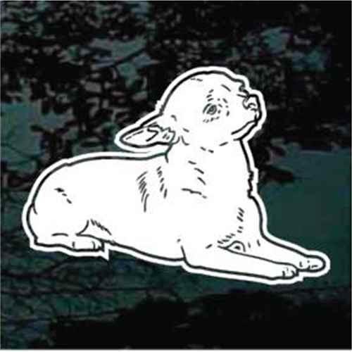 Chihuahua Down