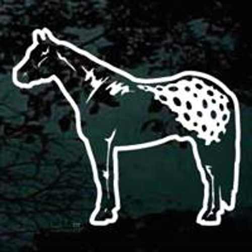 Appaloosa Horse 01