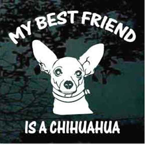 Chihuahua My Best Friend